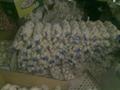 fresh china garlic from chinese garlic factory 2