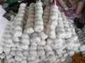 fresh china garlic from chinese garlic factory 3