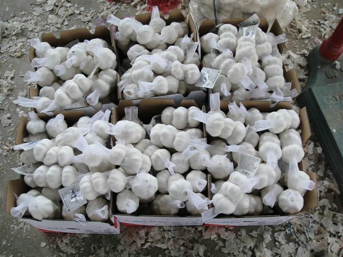 2013 new fresh garlic 2