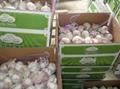 2013 new fresh garlic 3