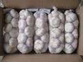 chinese fresh white garlic exporter