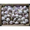 chinese fresh normal white garlic exporter 4