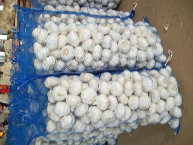 pure white garlic.normal white garlic.fresh garlic.garlic factory 3