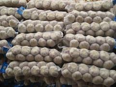 Fresh Braids Garlic