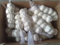 pure white garlic 250g*40 10kg cartons