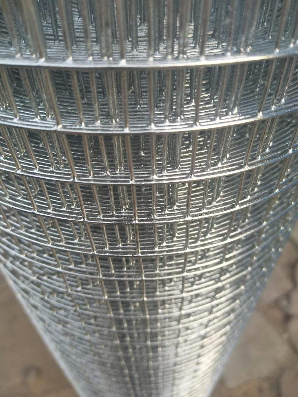 Aviary Bird Wire Mesh Galvanised Welded Mesh Roll China