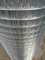 Aviary Bird Wire Mesh Galvanised Welded Mesh Roll