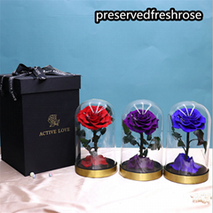 Preserved Rose Flower Gifts With Metal Base In Glass Cover For Festival