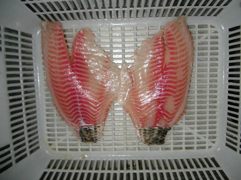 Tilapia fillets, skin-on; skinless; WGS (Oreochromis Niloticus) 2