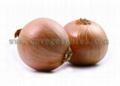 Non-Peeled Yellow Onion  1