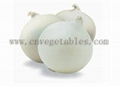 Fresh white onion (Non-peeled)