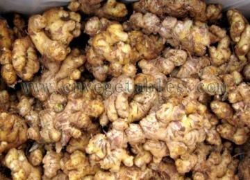 Fresh Ginger (Yunnan Variety)  1