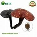 ganoderma  lucidum  extract 2