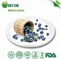 Bilberry extract 2