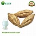 Kudzu root extract 2