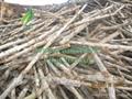 Non toxic 100% natural mangrove wood charcoal for hookah shisha 5