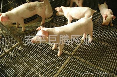 养猪网 1