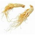 Ginseng polysaccharide 1