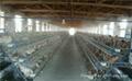 养鸡场喷雾杀毒工程设备