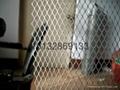 钢板网菱形网片 4