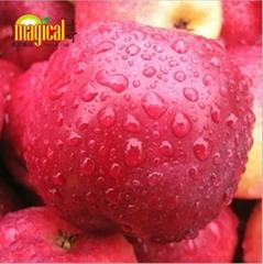 紅玫瑰蘋果