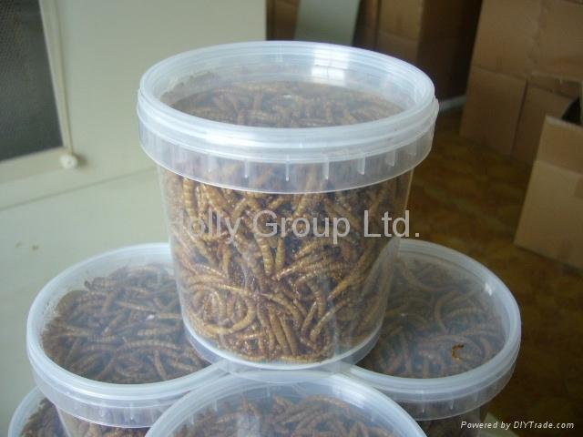dried mealworm 3