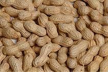 roasted peanut inshell  1