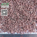 FD bloodworm