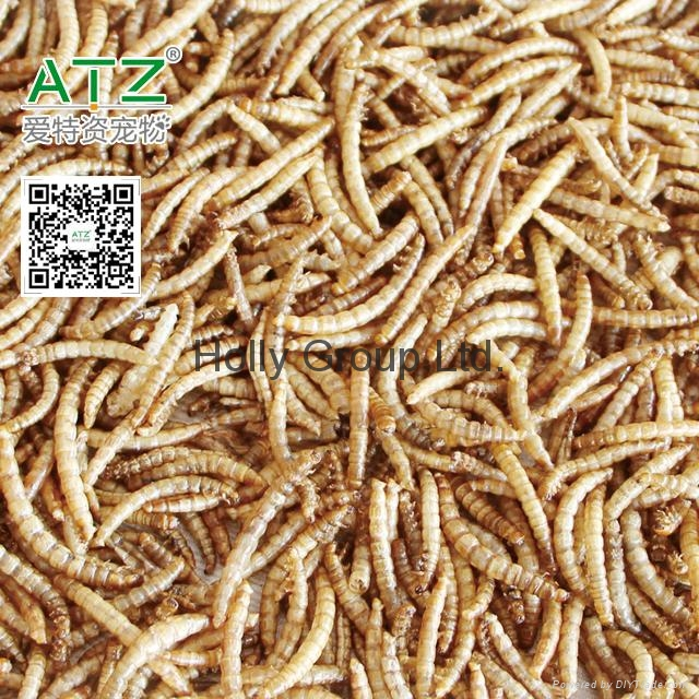 dried mealworm 1