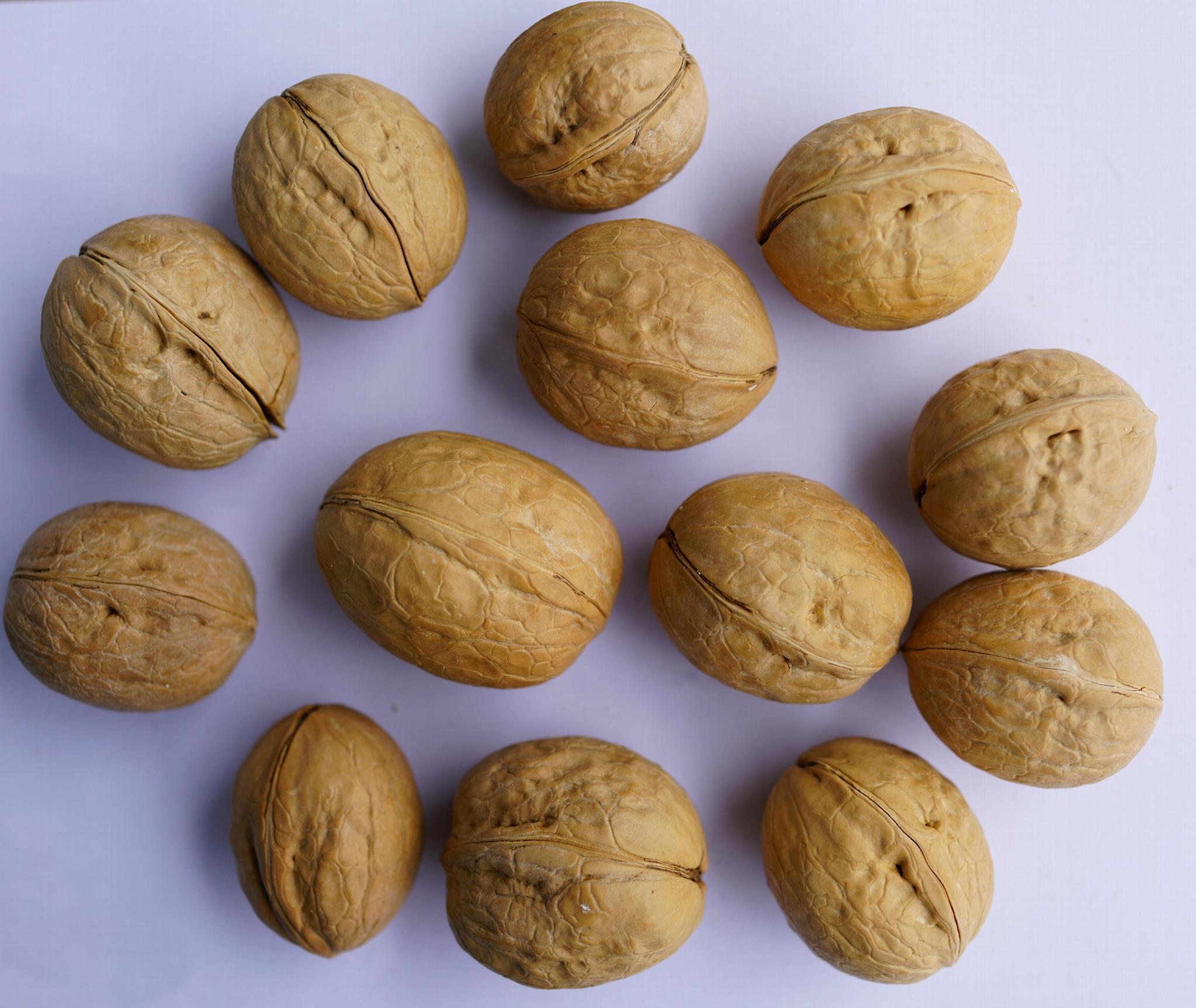 walnut inshell 1