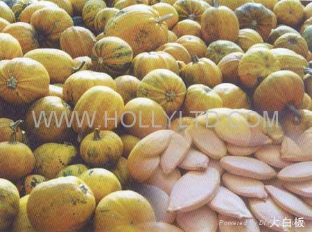 white pumpkin seeds 2