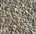 sunflower seeds kernels-bakery