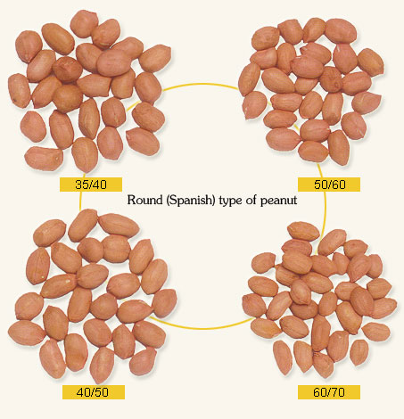 raw peanut kernels round shape 1