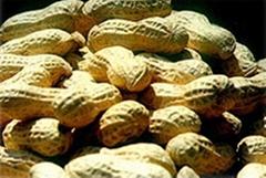peanut inshell virginia