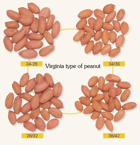 raw peanut kernels long shape 1