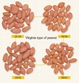 raw peanut kernels long shape