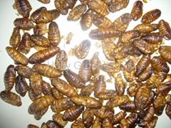 RD Silkworm