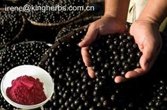 Acai Berry Extract Proanthocyanidins 40%