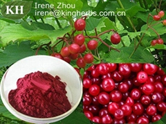 Cranberry Extract Anthocyanins 25%