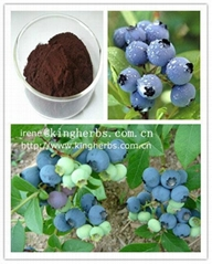 Bilberry Extract  Anthocyanidin 25%