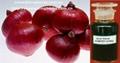 Pure natural Onion Extract / Allium Cepa