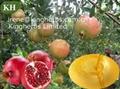 Pomegranate  Hull Extract  Ellagic Acid