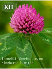 Red Clover Extract  Isoflavons 20%, 40%, 80% HPLC
