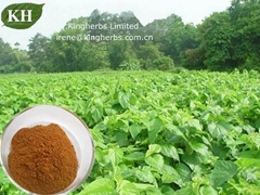 Pure Natural Mulberry Leaf Extract 1-DNJ 1%-30% by HPLC