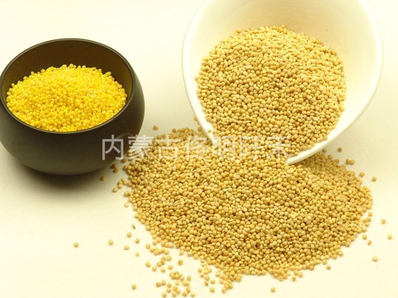 Yellow Millet 1