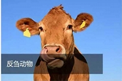 饲料养殖牛马羊宠物养殖酵母