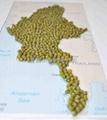 供应缅甸绿豆