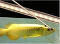 Aquarium Lighting LED Lighting 2