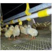 塑料平网/鸡鸭养殖塑料网/专业塑料网生产厂家