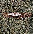 鋼絲格柵網
